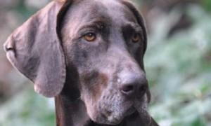 Workshop voor instructeurs van apporterende jachthonden -1/3