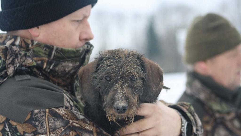 Om een vos uit zijn bouw te jagen is veel moed nodig