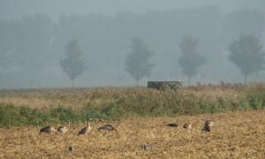 De Jagersvereniging helpt haar leden op weg met jacht in Natura 2000 gebieden