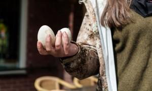 Stop met het stilletjes vernietigen van heerlijke ganzeneieren – Vrij Nederland