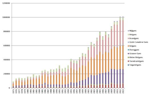 Deze grafiek geef de groei van het gemiddeld aantal in Nederland aanwezige ganzen gedurende het jaar weer. De laatste jaren hebben we in Nederland zo'n 500-600.000 ganzen in de zomer, wat in de winter oploopt tot ongeveer 2,5 miljoen ganzen (Bron: SOVON Vogelonderzoek).