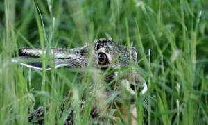 Actieve bijdrage bescherming Natura 2000-gebieden gevraagd aan Gelderse jagers