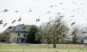 Update vogelgriep 22/11: beperkingen jacht nog van kracht