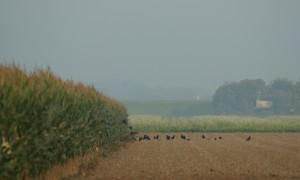Update intrekking vrijstellingen Gelderland 07/09: Schadebestrijding vanaf heden weer mogelijk