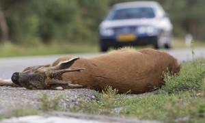 Jagers: beter door het geweer dan door het verkeer – Omroep Zeeland