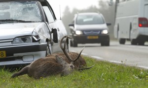 De gevaarlijkste wegen van Nederland – SBS 6