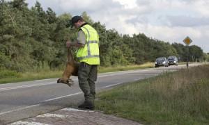 Hoera, daar ligt weer een dode otter – Algemeen Dagblad