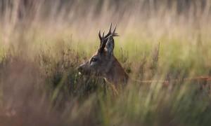 Vergeet het wildseizoen – Joël in 't wild, NRC