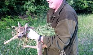 Persbericht: jagers en boeren redden 281 reekalfjes voor het maaien