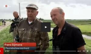 Jagers en vogelaars tellen samen tijdens ganzentelling – NOS journaal