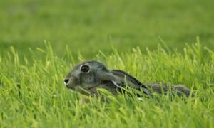 VVD stelt Kamervragen over dumping dode dieren in Haaren