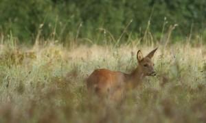 In de vroege ochtend klinken schoten in het veld – Dagblad van het Noorden