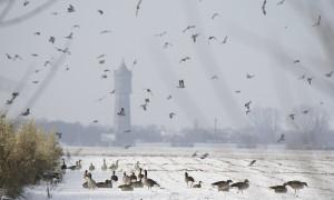 Mogelijk vogelgriep in Nederland, geen consequenties voor jacht