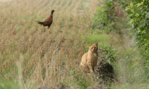 Verwilderde kat soms afschieten – De Limburger
