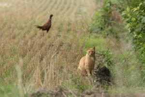 Kat struint in het Nederlandse landschap