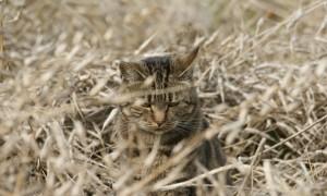 Jagers pleiten voor afschot verwilderde kat – Leeuwarder Courant