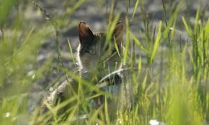 D66 stelt Kamervragen over rechtswetenschappelijke onderzoek naar de Habitatrichtlijn en Vogelrichtlijn