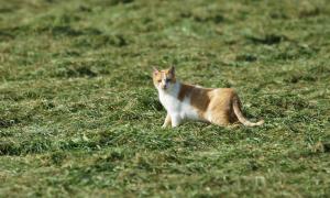 Jagersvereniging: Verwilderde katten richten veel schade aan