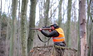 Eerste bewegingsjacht op wilde zwijnen in Nederland