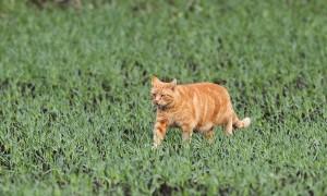 Boswachter waarschuwt: 'Je huiskat richt een ware slachting aan in de Brabantse natuur' – BN De Stem