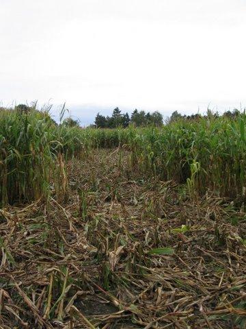 De provincies hebben daarom opdracht gegeven aan het Faunafonds om in 2016 de schades aan landbouwgewassen te taxeren en nieuwe dassenovereenkomsten af te sluiten van 2016 tot en met 2020