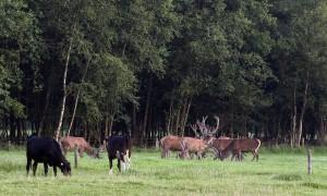 'De jager die niet jagen wil' – Reactie Jagersvereniging op uitzending Brandpunt