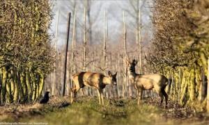 Door de ogen van een jager – filmcompilatie