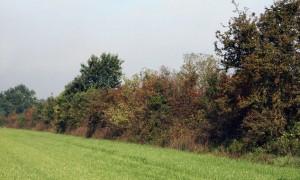 Excursie kleine landschapselementen – Lochem
