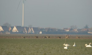 Bijna duizend reeën gespot rond Kromme Rijn – RTV Utrecht