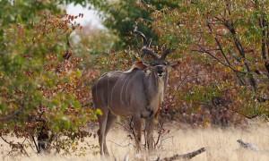 Stelling: jacht als economische drager van natuurbescherming