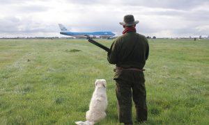 Jagers voorkomen vogelaanvaringen rond Schiphol