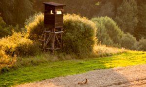 Jagersvereniging: doe aangifte van vernielingen aan hoogzit. Oproep: stuur kaart naar jager