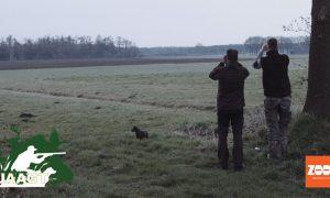 Privé: Reewildtelling in Drenthe