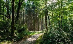 'Groene boa's' betrappen illegale crossers in Beuningen – De Gelderlander