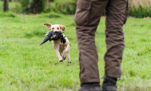 'Op zoek naar de beste jachthond' – De Telegraaf