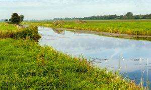 Opnieuw hazenpest (tularemie) gevonden in Midden-Nederland – DWHC