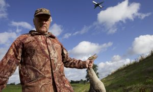 Extra inzet van jagers rond Schiphol om aantal ganzen te verminderen