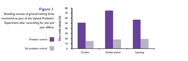 De conclusies van dit acht jaar durende experimentele onderzoek naar het broedsucces van de wulp (curlew), goudplevier (golden plover) en de kievit (lapwing) laat zien dat de overlevingskansen voor weidevogelkuikens 3 keer zo hoog zijn in gebieden waar roofdieren worden bestreden. Game & Wildlife Conservation Trust, February 2010