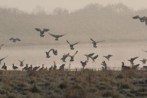 Dossier vogelgriep: hier leest u alle recent verschenen informatie over de vogelgriep eenvoudig terug