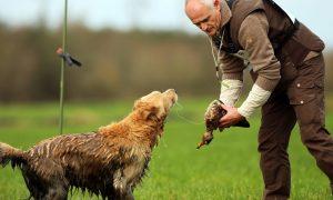 De beste jachthonden van Nederland – BNR Nieuwsradio