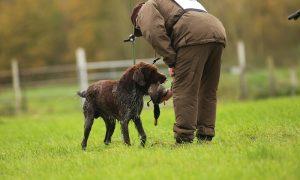 Persbericht – 18 jachthonden geselecteerd voor Nimrod: wedstrijd voor beste jachthond van Nederland