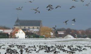 Update Vogelgriep 29/11: Jagersvereniging benadrukt bezwaren tegen jachtbeperkingen