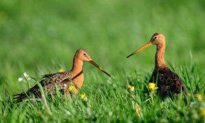 Jagers: meer broedgebieden en minder roofdieren – Nieuwe Oogst