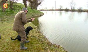 Dode dieren apporteren en speuren met de neus bij het jachthondenkampioenschap – Omroep Brabant