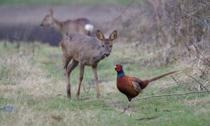 Jagersvereniging vraagt aandacht voor Leefbaar Landschap tijdens kabinetsformatie