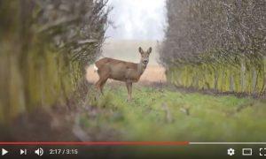 Door de ogen van de jager – maart 2017
