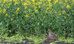 Jagers in het groen, biotoopverbetering door en met jagers – De Jager #4 2017