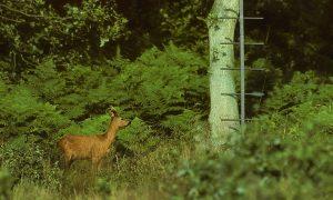De Jagersvereniging presenteert standpunt reeën