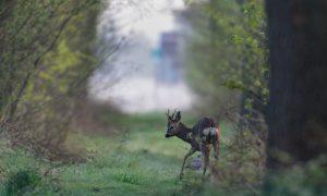 Nieuw Faunabeheerplan Noord-Brabant op 1 juli in werking