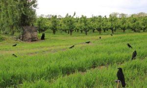 Jagersvereniging waarschuwt leden: totaalverbod op het gebruik van lokmiddelen bij landelijke vrijstelling